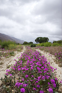 purple-flowers-photo